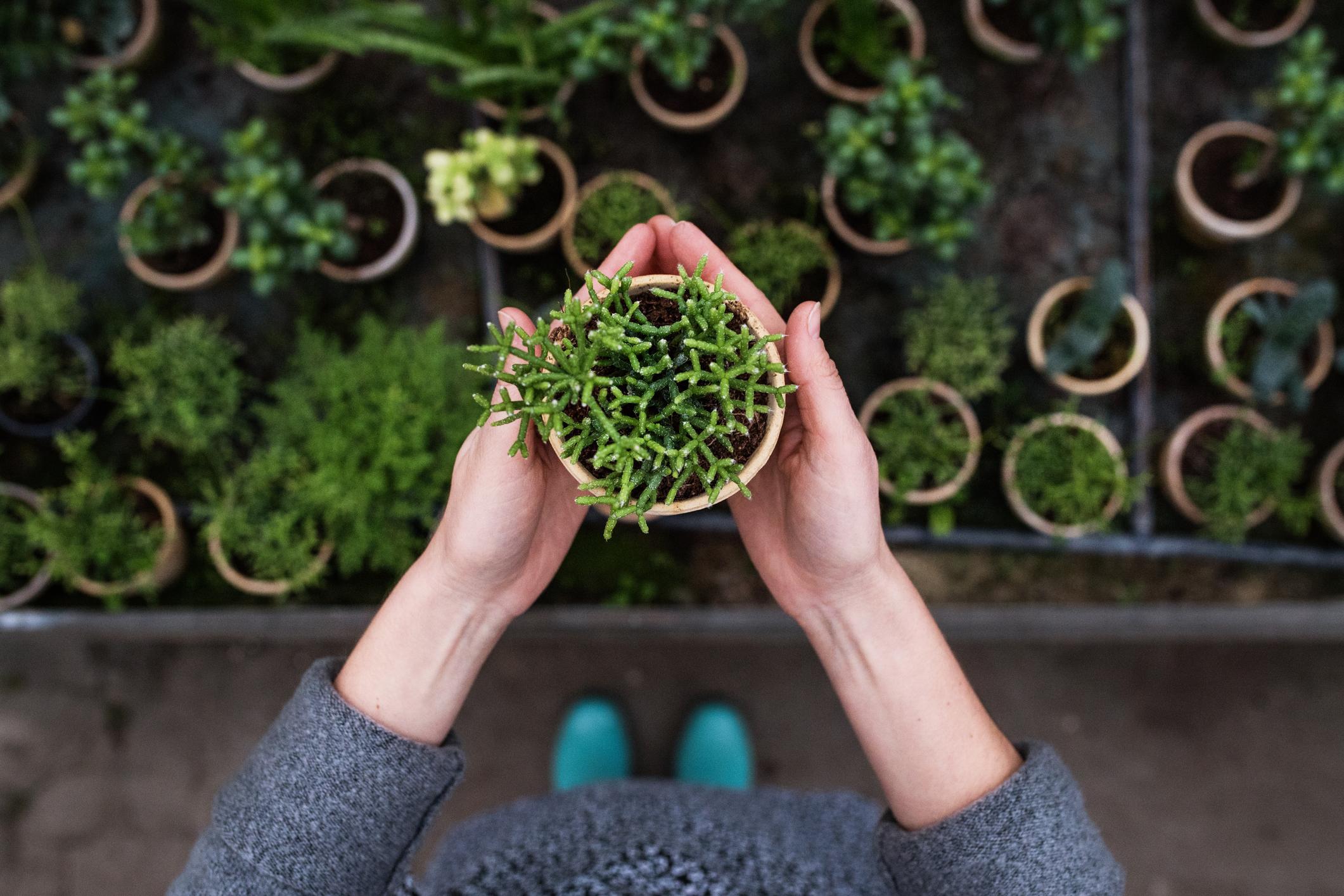 Jardins em casa: 9 ideias para te inspirares