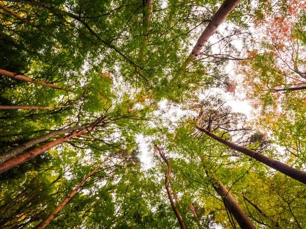 Ecoturismo: ajuda o planeta mesmo de férias!