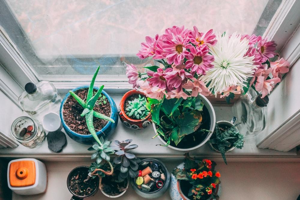 #PlantLovers? Temos uma secção repleta de plantas à tua espera