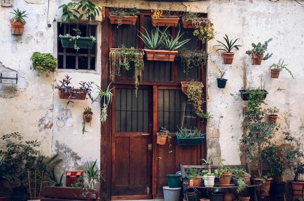Constrói o teu próprio jardim vertical em casa em 6 passos