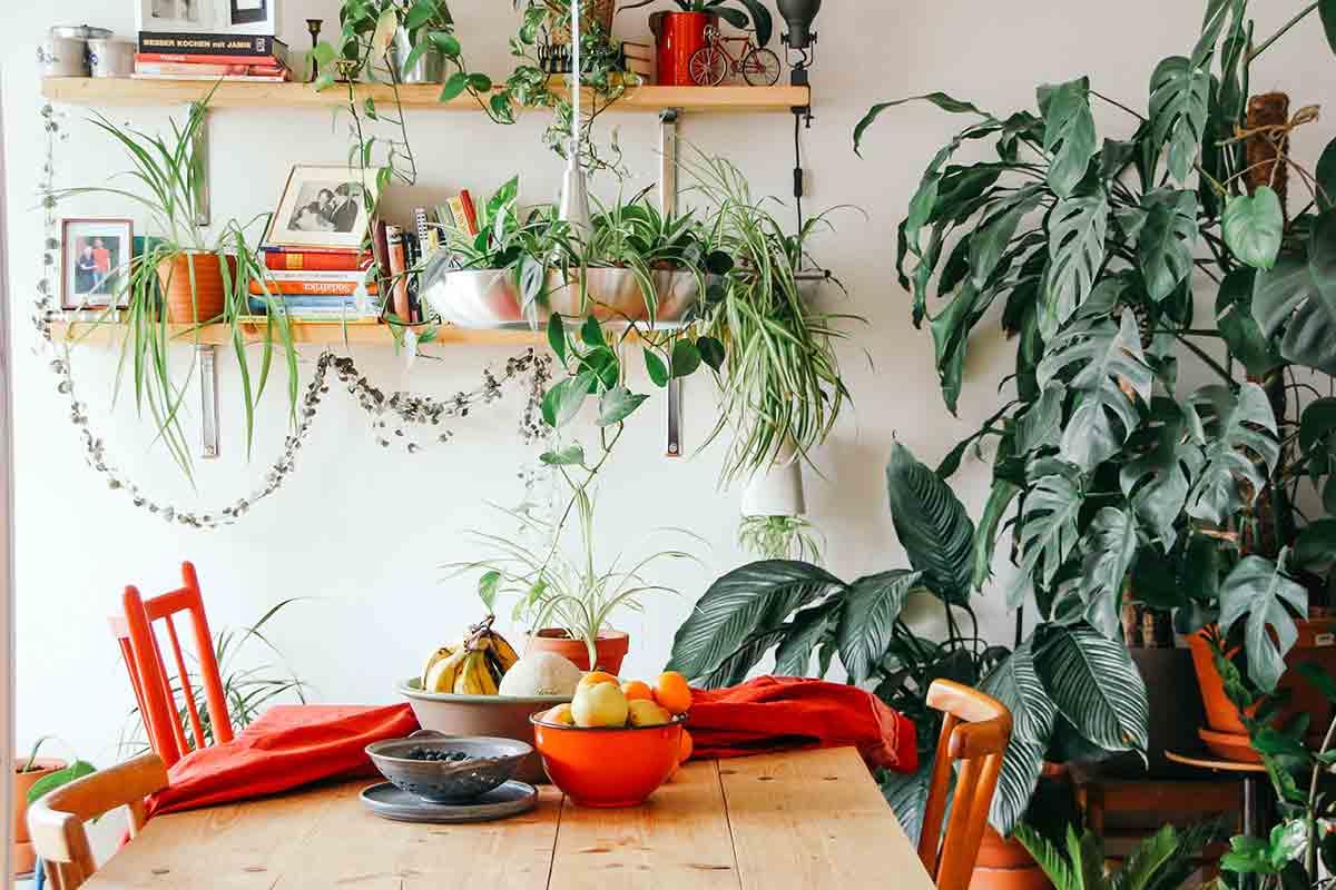 As melhores plantas de interior para ter em casa sem muito trabalho