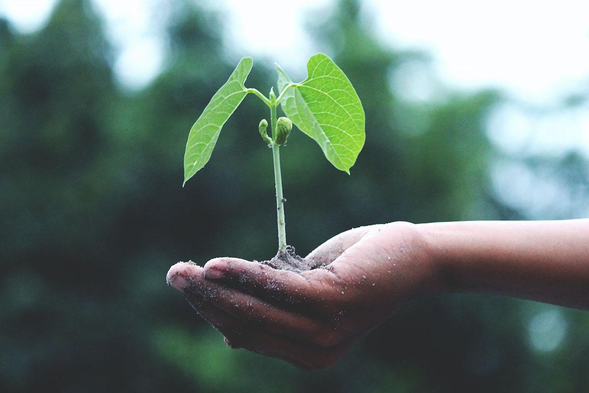 Fundo Ambiental: o apoio para tornar as casas mais sustentáveis