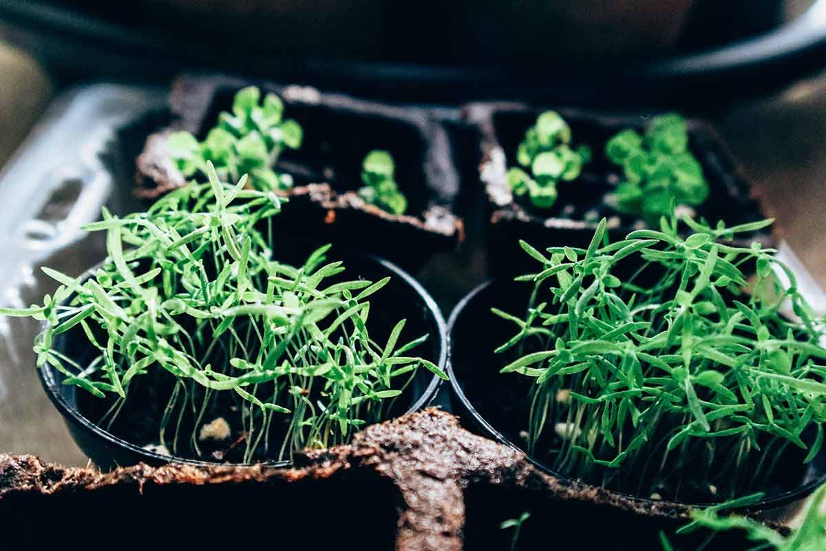 7 dicas para criares a tua própria horta em casa