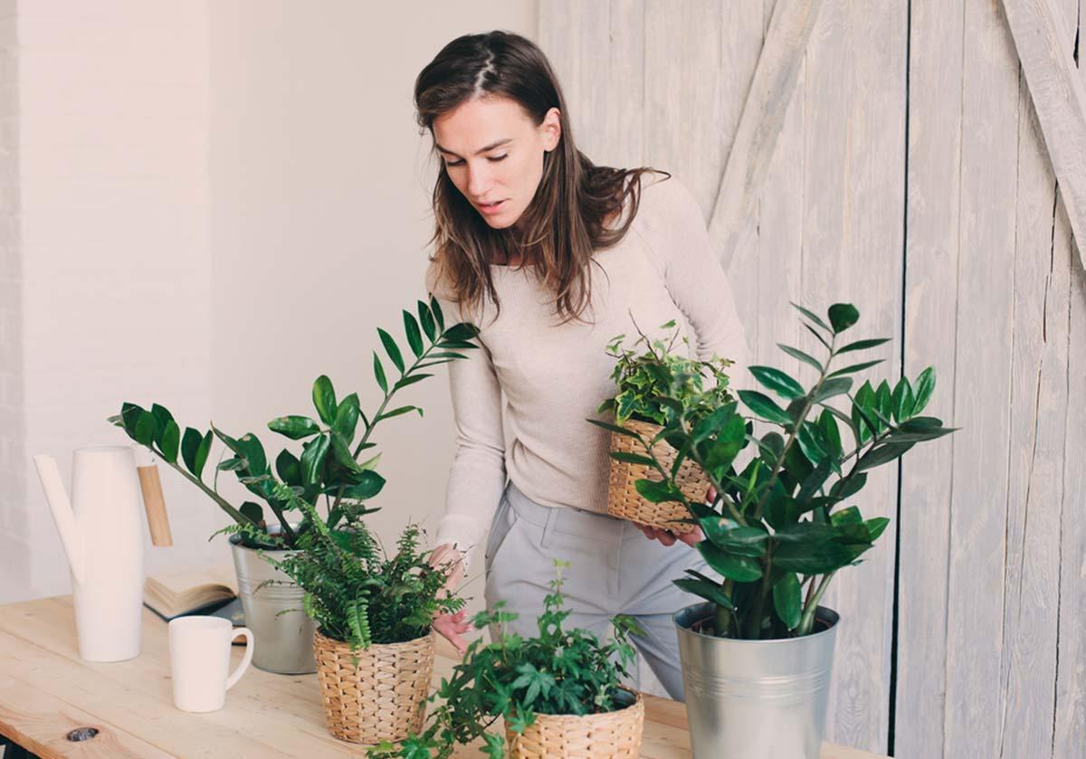 Plantas de interior resistentes: dicas para plantar e cuidar