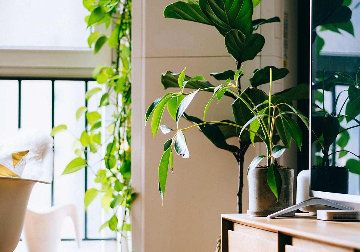 8 plantas que purificam o ar da tua casa