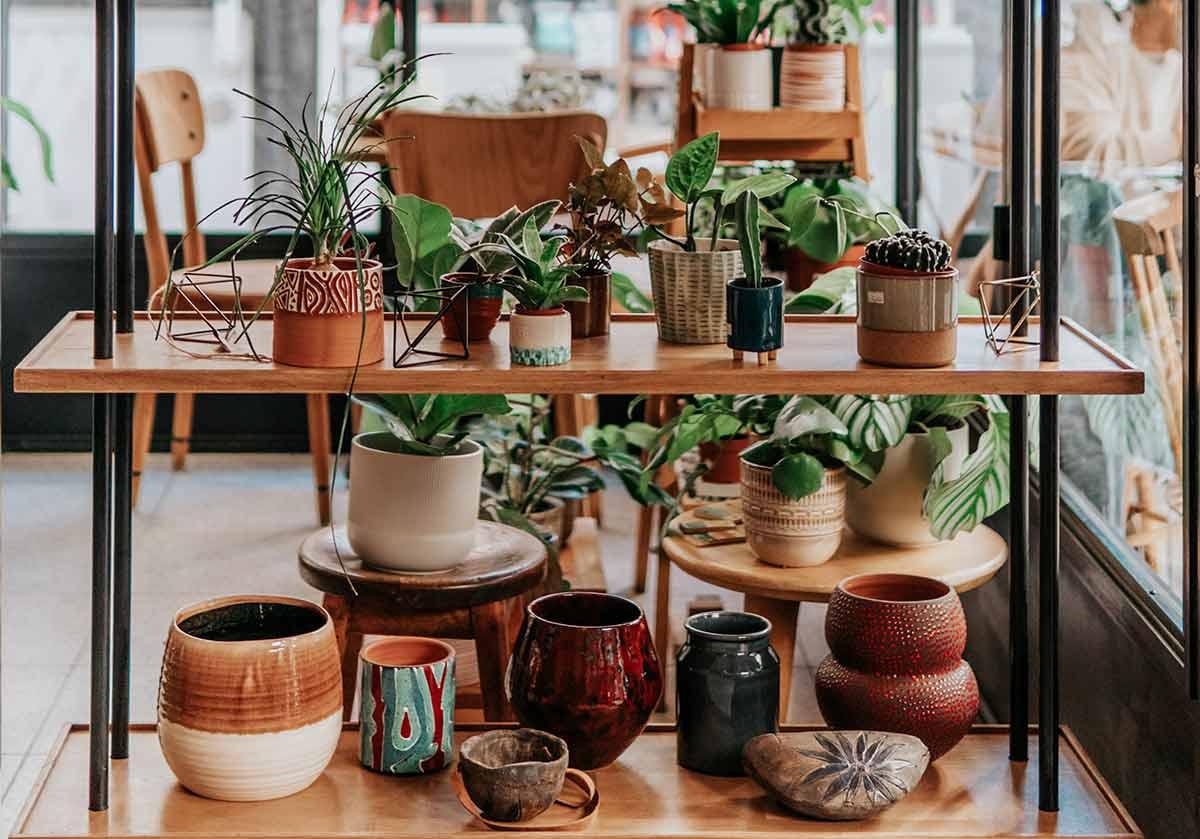Vasos para plantas: como escolher o melhor para cada tipo de planta